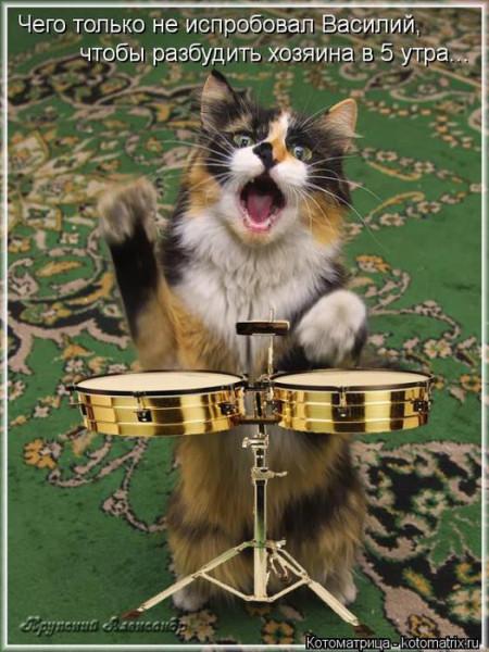 кот-барабанщик