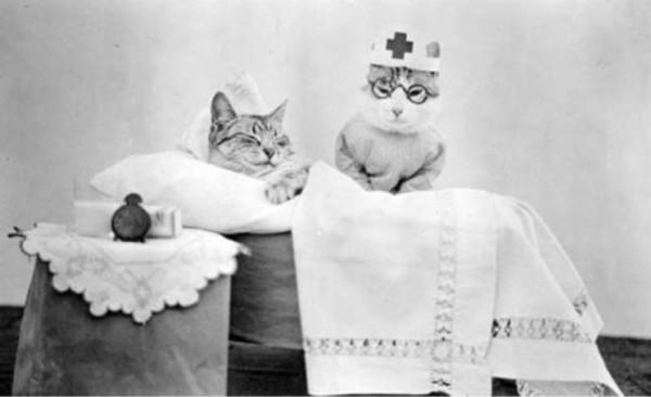 кот-врач