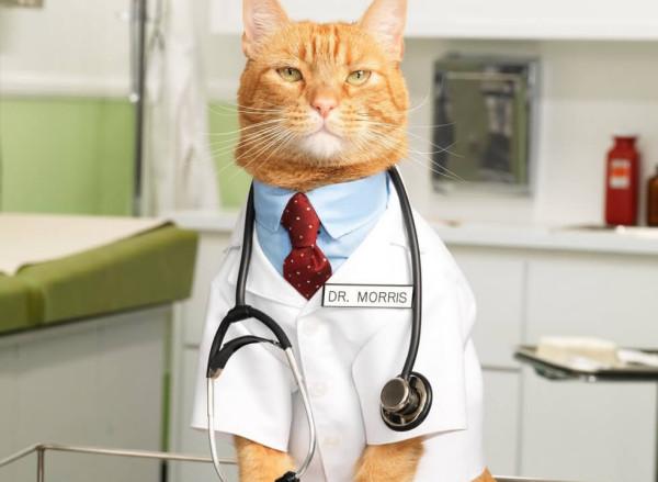 кот-врач2