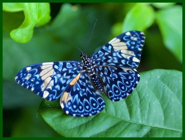 голубая тропическая