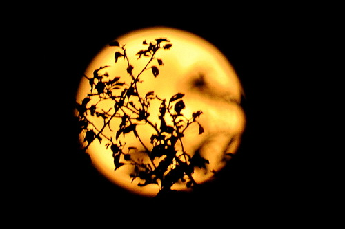 луна золотая вышитая