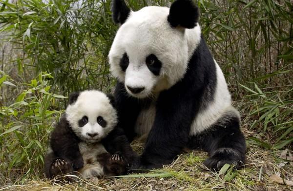 мама и панденок