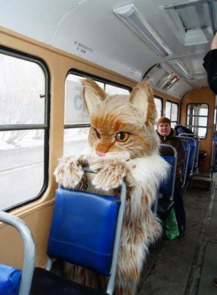 в трамвае кошка