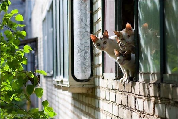 Наконец-то весна кошки