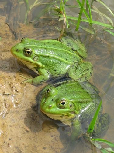 зеленая парочка