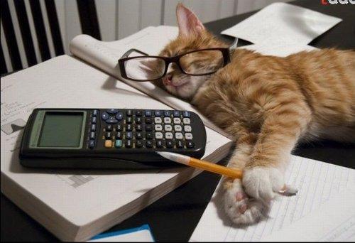 кот-бухгалтер