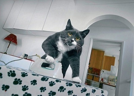 кот-гладильщик