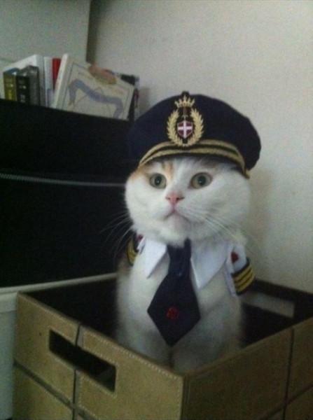 кот-капитан
