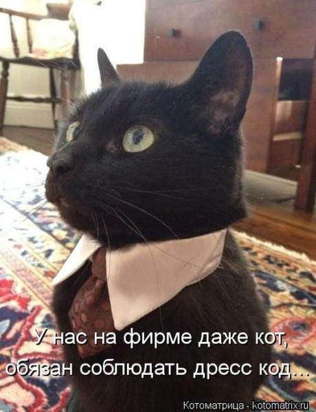 кот-клерк2
