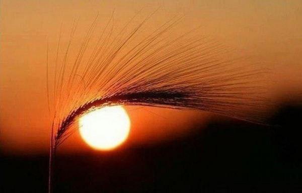 солнечный глаз с ресничками.