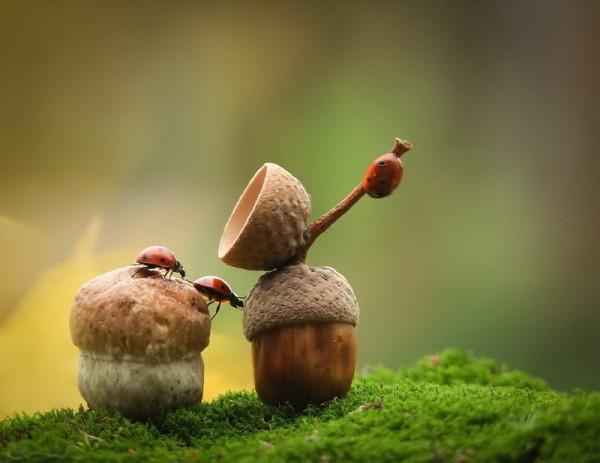 близнецы- гриб и желудь