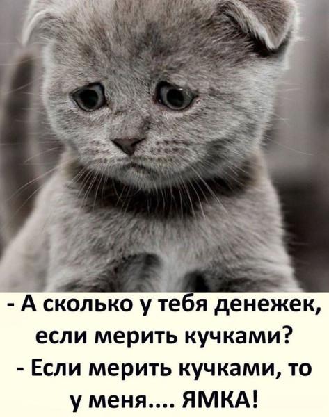 взгляд грустного котика2