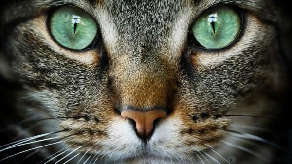 бирюзовые глаза