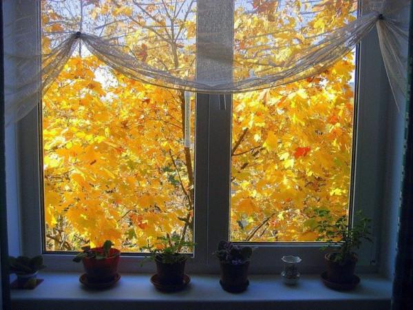 Снова листья летят за окном
