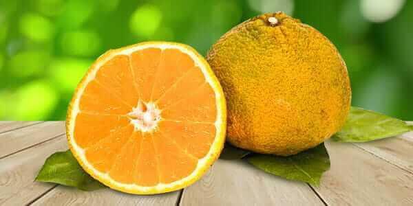 Агли гибрид мандарина и апельсина