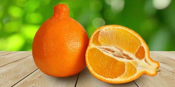 минеола гибрид апельсина и тангерина