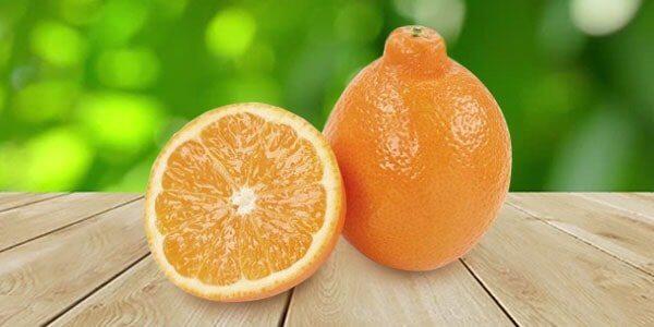 танжело гибрид мандарина и грейпфрута