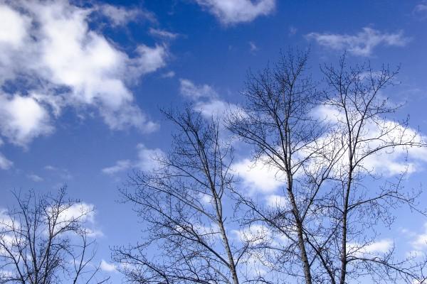 В синеве небесных вод