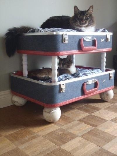 дизайн для кошек2
