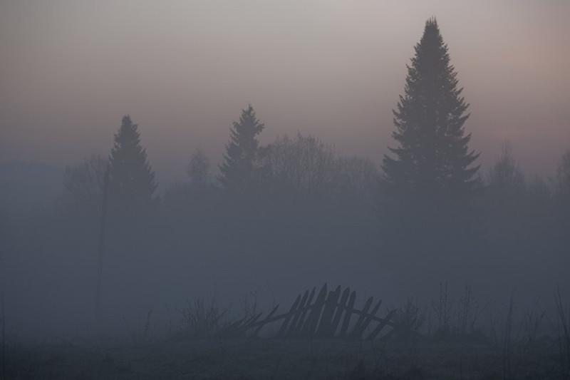 Туман над лесом костромским. Фото: Гугл.