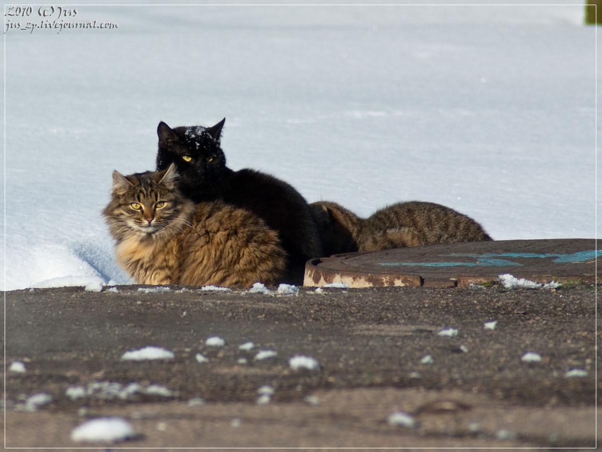 Коты чб