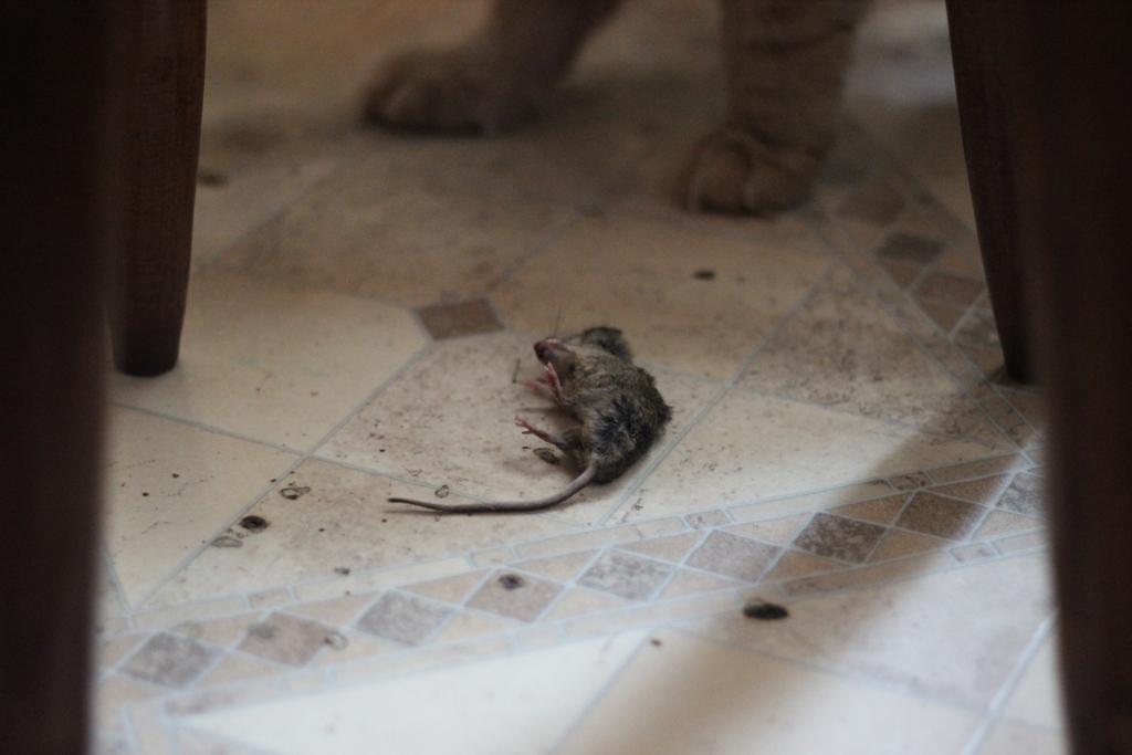 Мыша в обмороке