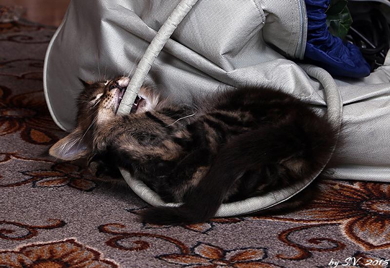 Очень хорошая сумка