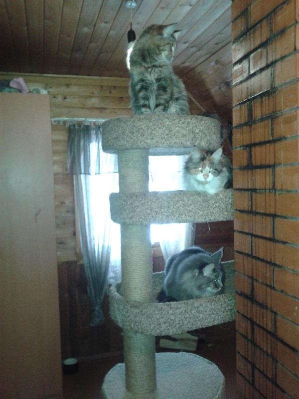 Трое в доме