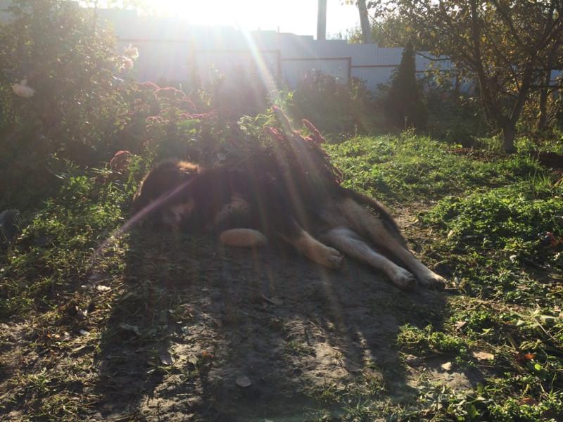 Балма против солнца