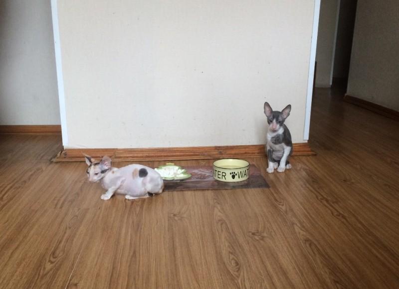 Пеппина и Пинкертон