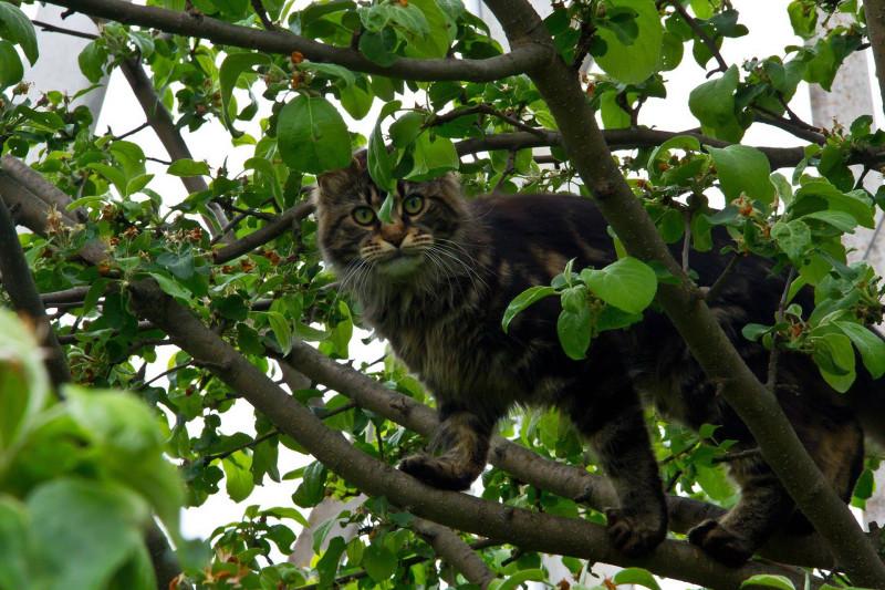 Джойс на дереве