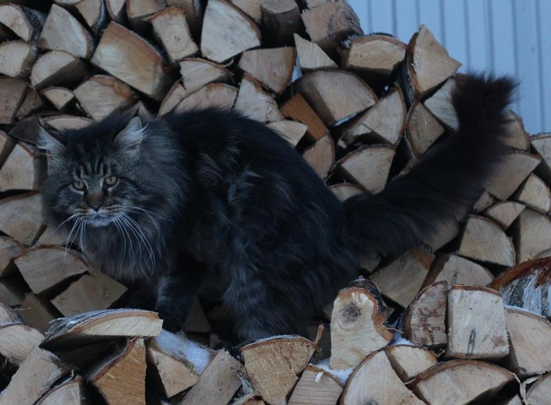 Варлак в дрова