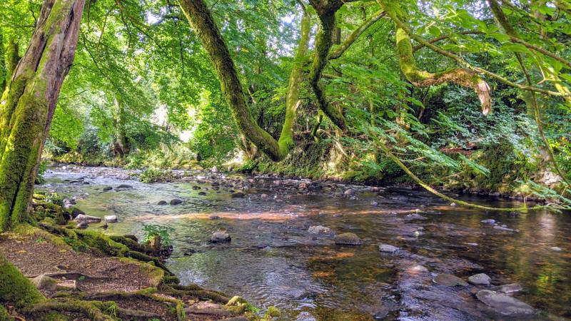 River Avon, South Brent