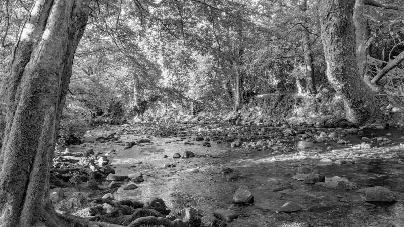The River Avon, South Brent, Devon