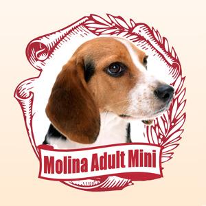 molina_preview