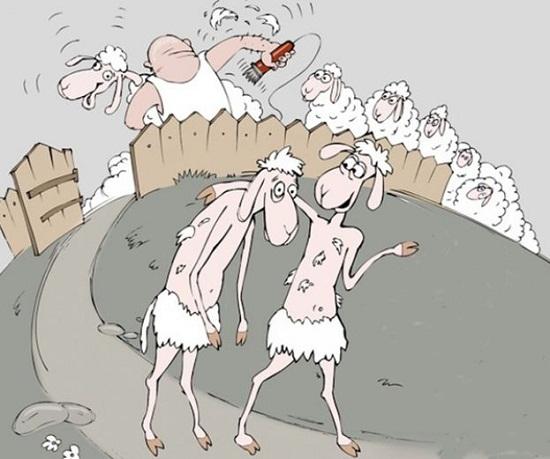 Стрижка овец_2