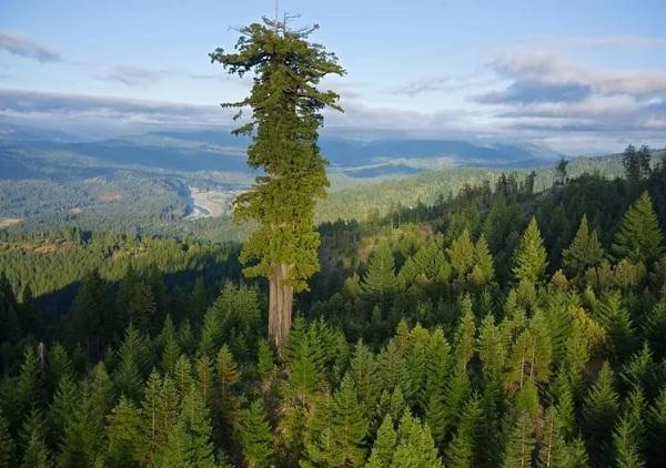 Деревья_2