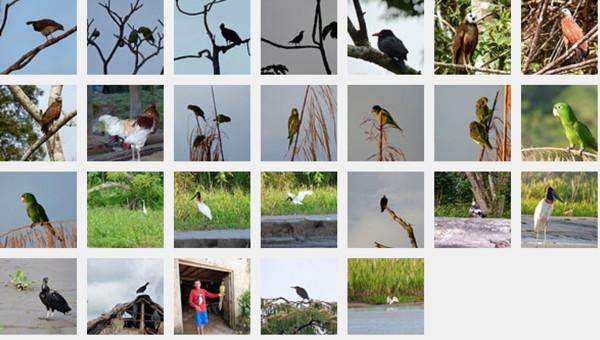 BirdsInJungleFlickrSet.jpg