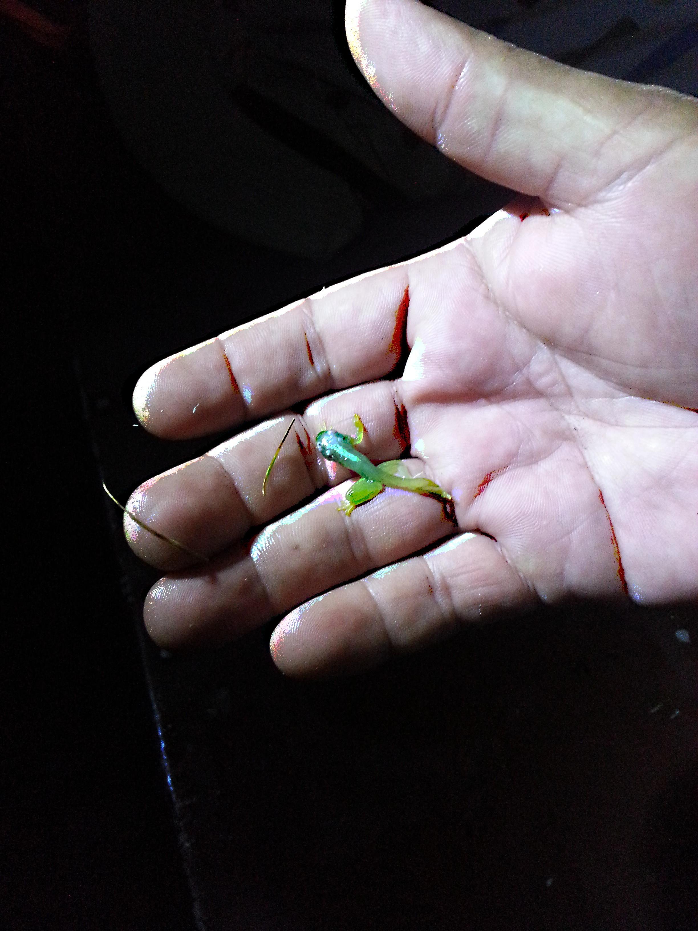 Frog in Jungle.jpg