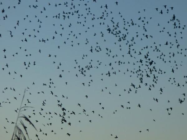 EarlyMorningBirds.jpg
