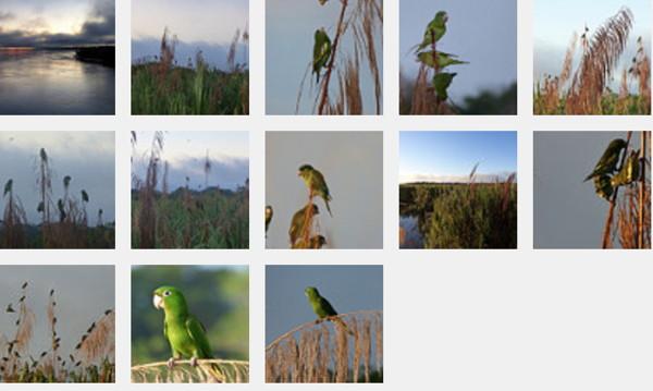 EarlyMorningBirdsFlickrSet.jpg