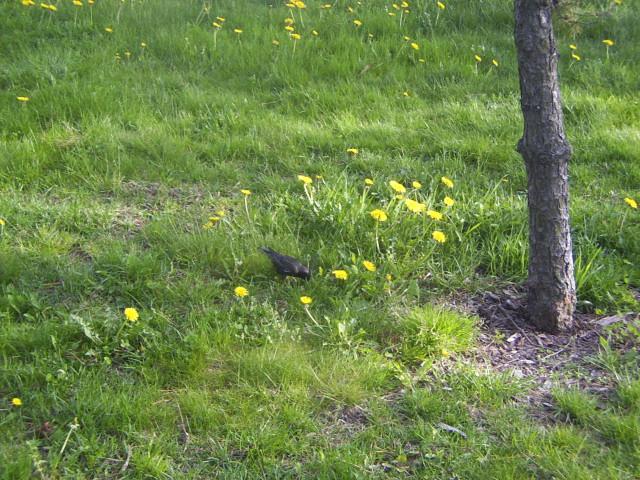 2005-05-13 bird