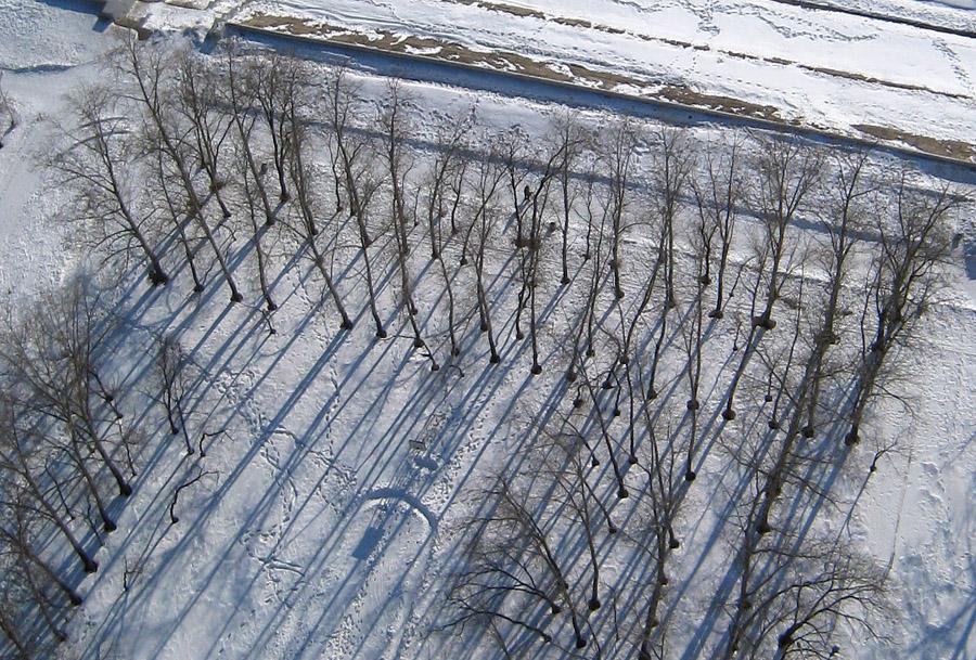 Деревья900