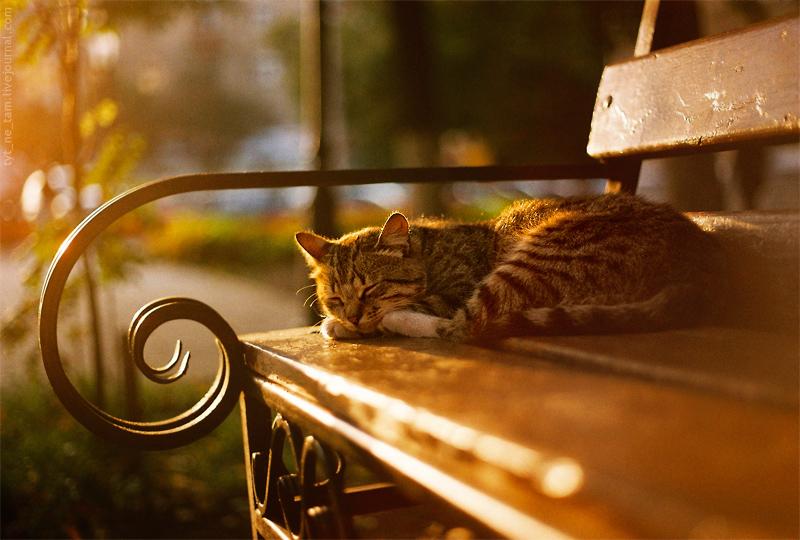 кот утро