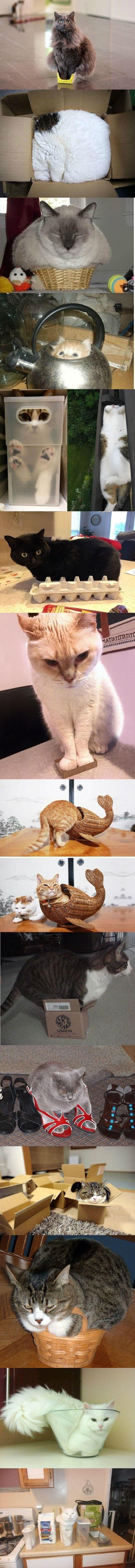 котейка коробки коты