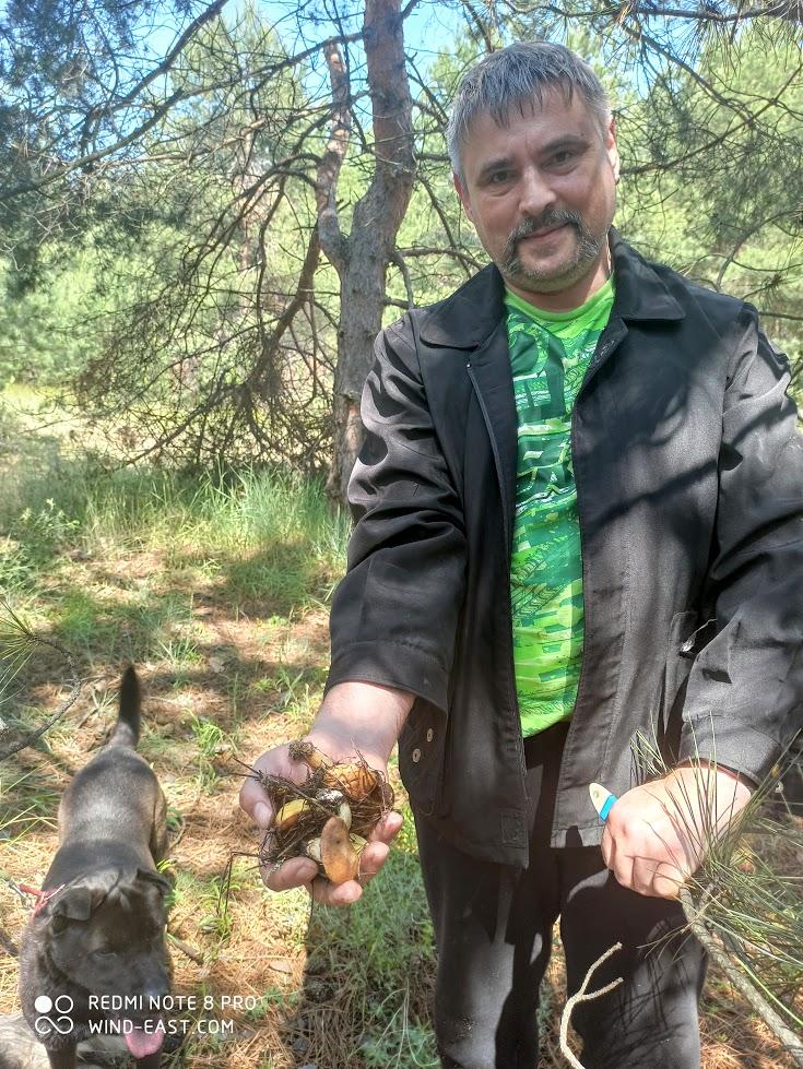 Жменька грибов