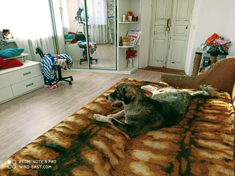 Собака под кондиционером