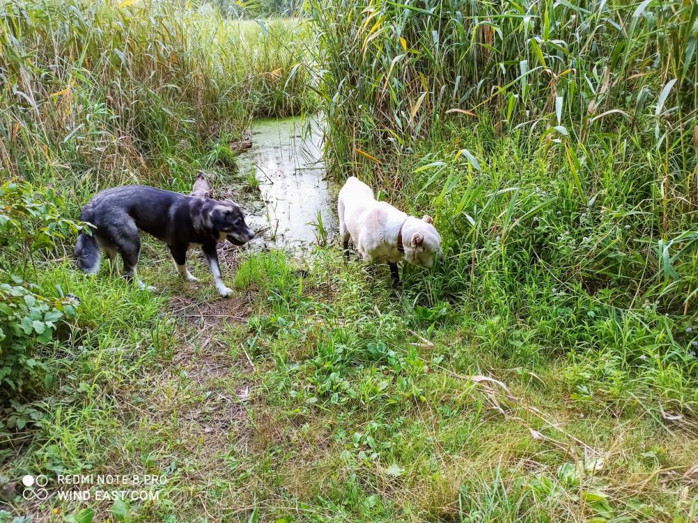 Гуляем в плавнях