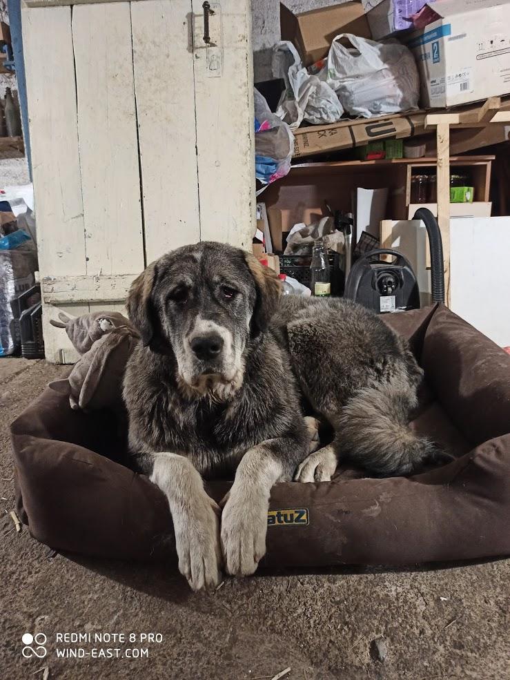 Собака САО отдыхает на лежаке