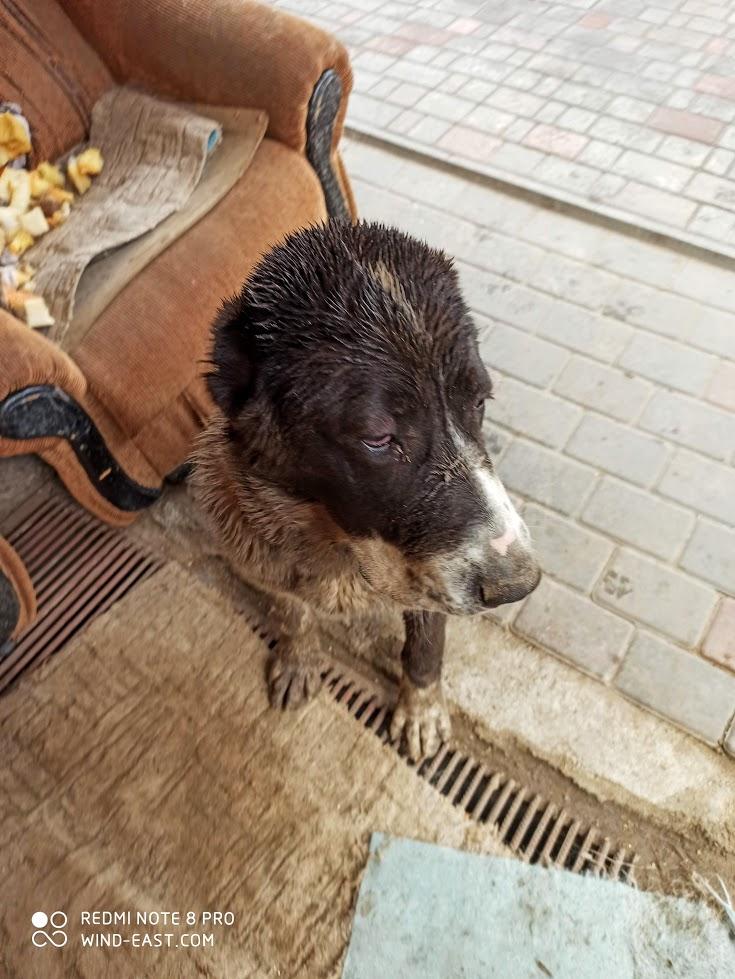 совсем не грязная собака